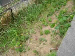 雑草,草刈り