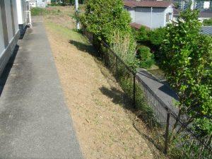 定期草刈り
